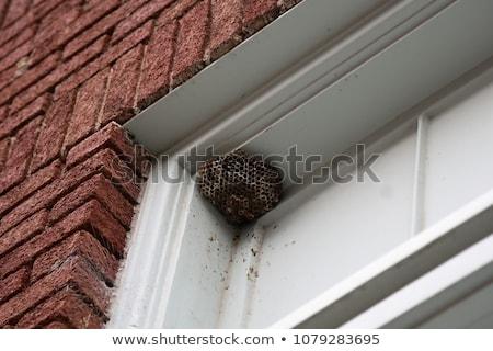Vespa nido effettivo casa fuori open Foto d'archivio © hakfin