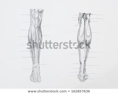 Esqueleto de volta lápis desenho feminino Foto stock © AlienCat