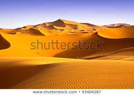 ストックフォト: 砂 · 砂漠 · リップル · スカラベ · 足跡 · 夏