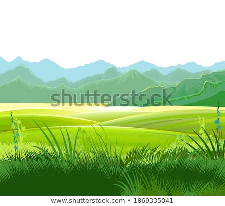 Taze saman çim tekstil yalıtılmış Stok fotoğraf © Photofreak