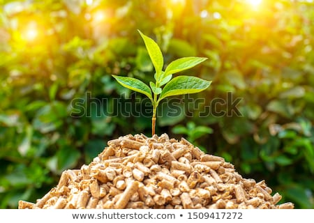 Wood Fuel for Biomass Stock photo © tainasohlman