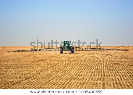 Flax and canola crop Stock photo © pictureguy