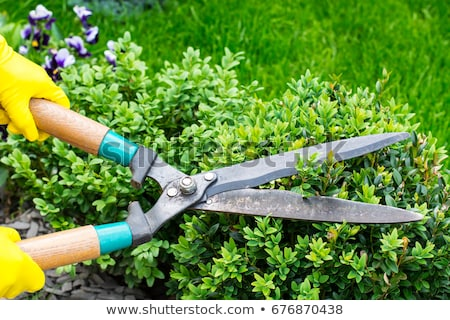 Pruner cutting dry branch Stock photo © icefront