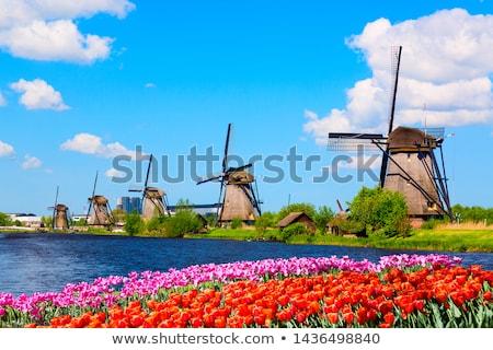 Hollanda tipik rüzgâr değirmen bayrak metin Stok fotoğraf © angusgrafico