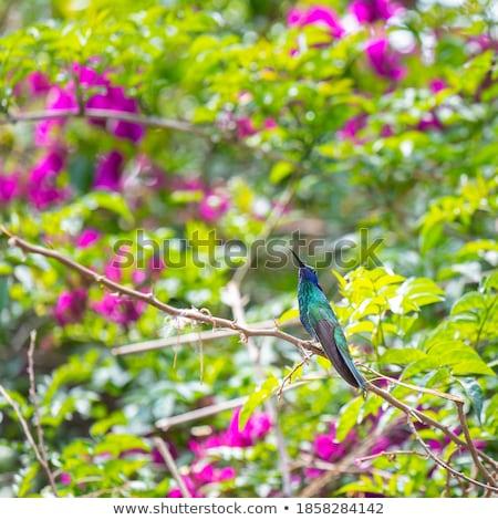 Beija-flor assistindo arame farpado cerca Foto stock © rhamm