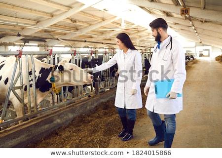 скота корова мяса животные животного сельского хозяйства Сток-фото © nelsonart