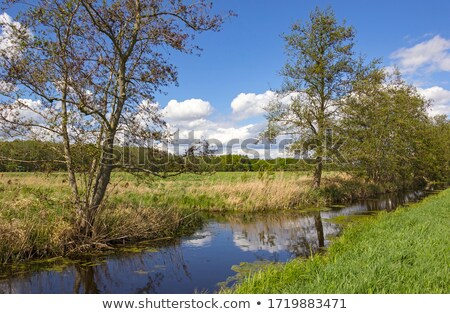 Stock photo: Forest scene with a small creek