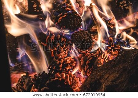 Sosny stożek wildfire lasu grecki Zdjęcia stock © Mps197