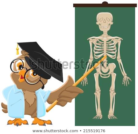 Owl teacher. Anatomy Lesson, the study of the human skeleton Stock photo © orensila