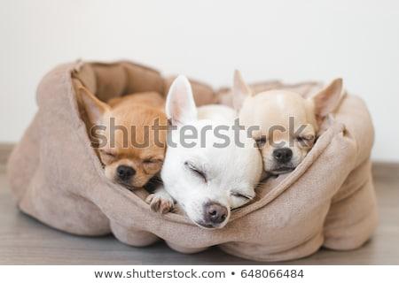 犬 座って 草 自然 肖像 動物 ストックフォト © mikhail_ulyannik