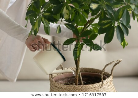 mujer · plantas · casa · retrato · sonriendo - foto stock © ozgur