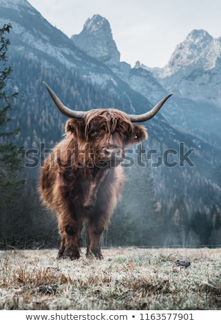 vaca · natureza · paisagem · montanha · fazenda · animal - foto stock © romitasromala