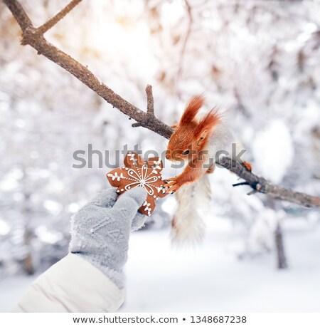 белку · лет · саду · цветы · лес · фон - Сток-фото © jaffarali
