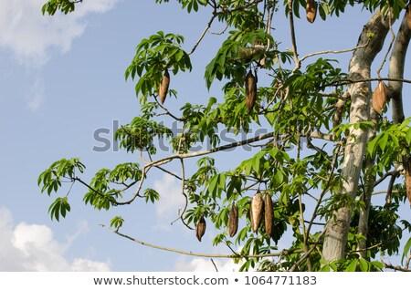 einsamen · Baum · trocken · Insel · Wasser - stock foto © pedrosala