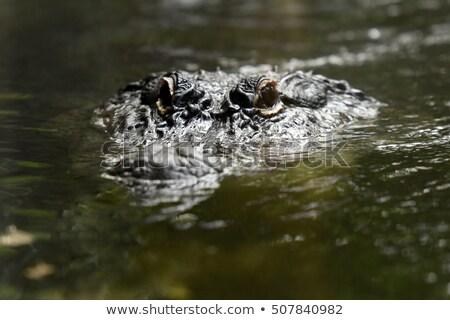 Krokodilok pár illusztráció család esküvő természet Stock fotó © adrenalina