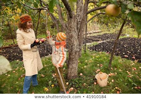 сын · яблони · саду · семьи · девушки - Сток-фото © Paha_L