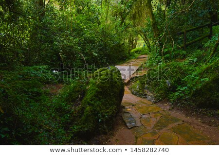 Stock photo: Walkway in secluded deciduous forest