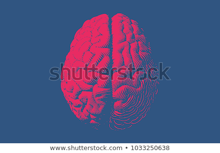 Human brain with blue background Stock photo © bluering