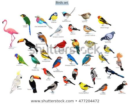 Set of wild birds Stock photo © bluering