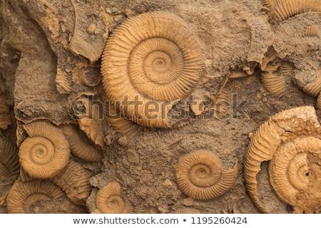 Fosil soyu tükenmiş hayvan toprak ölü kir Stok fotoğraf © bluering