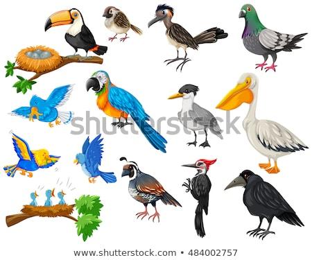 madarak · babák · szomszéd · illusztráció · épület · gyermek - stock fotó © bluering