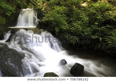 Cachoeira rio floresta natureza paisagem viajar Foto stock © davidgn