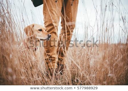 człowiek · rottweiler · najlepszy · przyjaciel · psa · piękna - zdjęcia stock © gregorydean