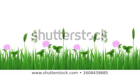 зеленый пышный листьев клевера иллюстрация Сток-фото © orensila