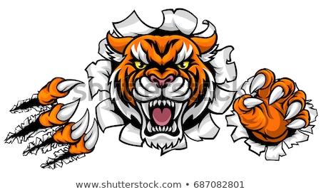 Tigris karmok áttörés mérges állat sportok Stock fotó © Krisdog