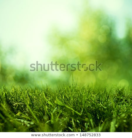 Vert luxuriante herbe texture nature environnement Photo stock © stokkete