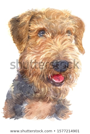 Watercolor portrait of airedale terrier dog Stock photo © Natalia_1947