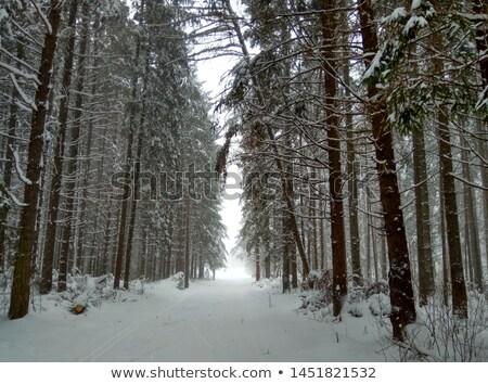 woman walking in winter forest on snowy trail stock photo © blasbike