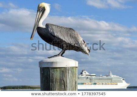 док позируют Флорида океана птица портрет Сток-фото © craig