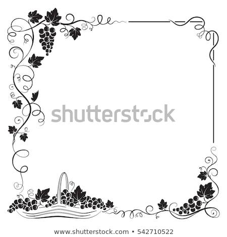Díszes keret szőlő szőlő színes illusztráció Stock fotó © lenm
