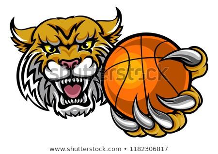 manó · tart · kosárlabda · labda · sportok · kabala - stock fotó © krisdog