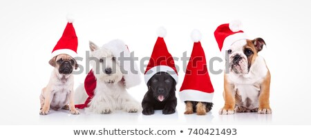 group of five dogs wearing santa hats panting stock photo © feedough