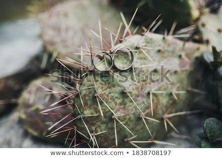 Deux alliances cactus blanche or diamants Photo stock © fama