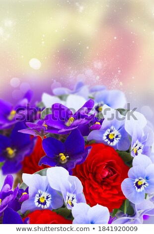 posy of violets pansies and ranunculus stock photo © neirfy