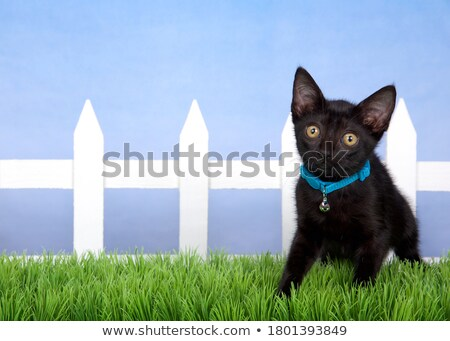 curious black and white cat wearing blue collar sitting Stock photo © feedough