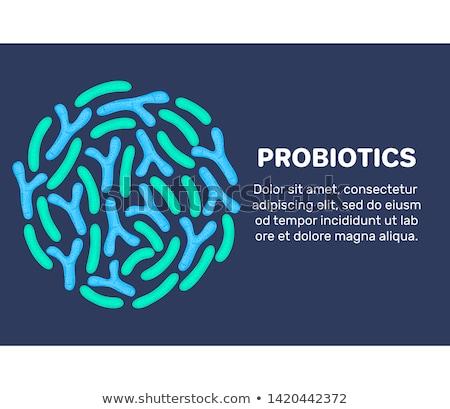 vector probiotics in circular shape bifidobacterium lactobacillus lactic acid bacterium stock photo © user_10144511
