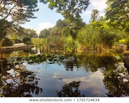 Wild idyllisch vijver vreedzaam zonnige park Stockfoto © prill