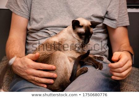 Korthaar kitten witte vergadering samen Stockfoto © CatchyImages