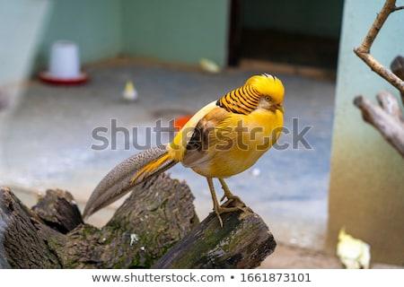Portré természet háttér szépség narancs madár Stock fotó © bbbar