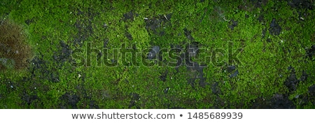 stone surface with moss and lichen stock photo © prill