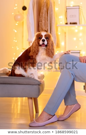It's comfy Stock photo © photography33