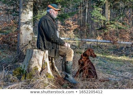 cão · de · caça · floresta · morto · animal · de · estimação · caça - foto stock © taviphoto