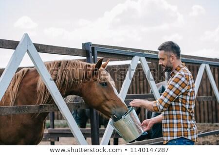 Feeding the horses Stock photo © smuki