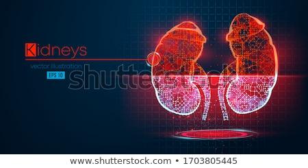 Grey digital body with organs Stock photo © wavebreak_media
