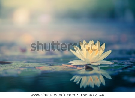 flower and been stock photo © badmanproduction