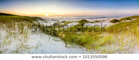Beautiful waves at coast Stock photo © leungchopan